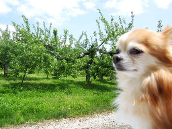 山形 果樹農園 青い空