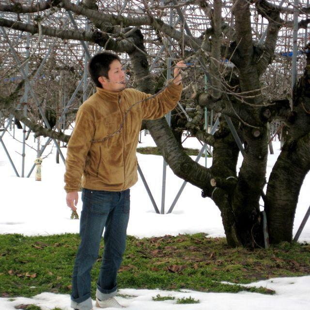山形 果樹農園 佐藤錦 紅秀峰